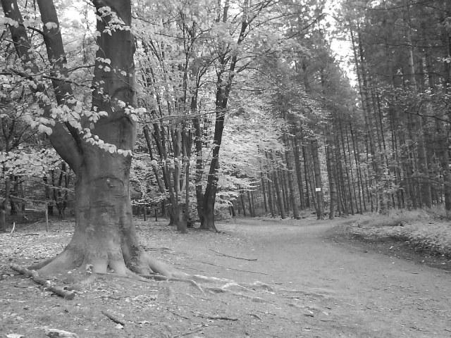 Árvores em Haan - Alemanha